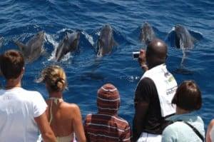 Ver delfines en Gran Canaria