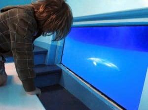 Excursión en barco Spirit of the Sea