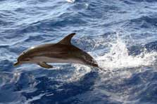Spirit of the Sea – barco delfines