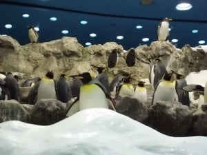 Loro Parque pinguins