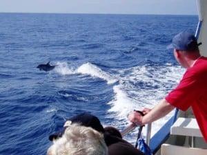 Ver delfines en Puerto Rico