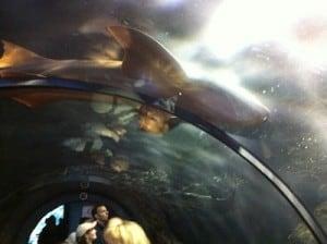 acuarium Loro Parque