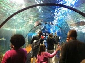 loro parque acuario