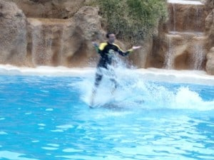 loro parque shows