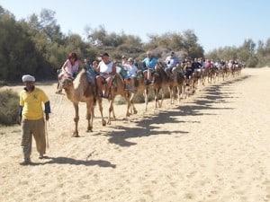 camellos maspalomas dunas