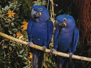 papagayos loro parque
