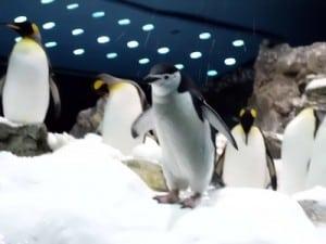 pingüinos loro parque