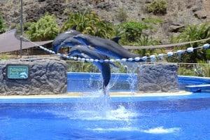 delfines gran canaria