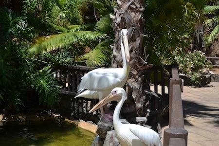zoo gran canaria