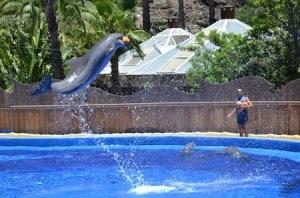 palmitos espectaculo delfines