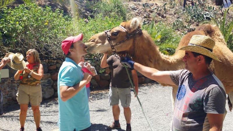 beso de gustavo - camello gran canaria