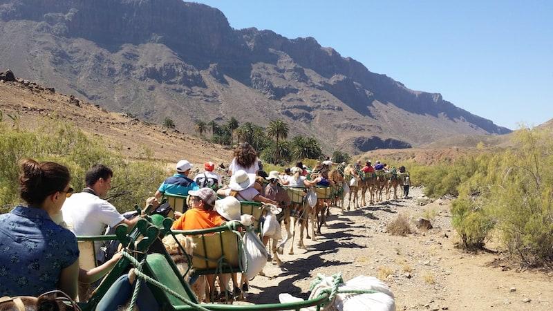 camel tour Fataga