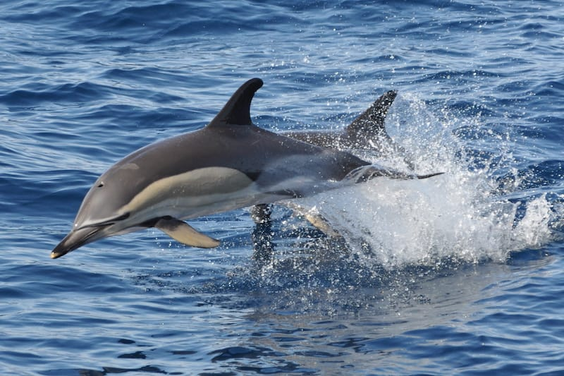 dolphin tours Gran Canaria