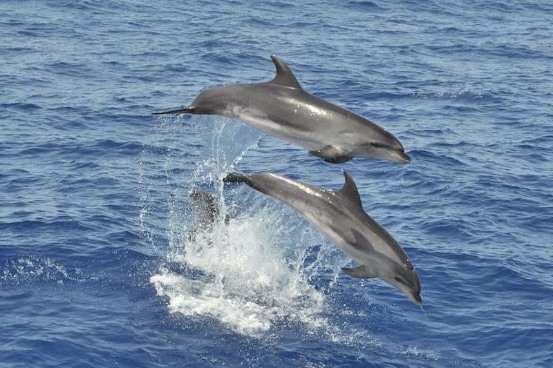 Maspalomas - playa del ingles dolphins
