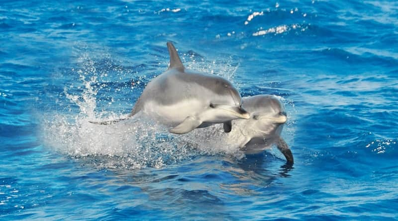 Supercat – Dolphin trip