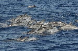 excursión barco delfines