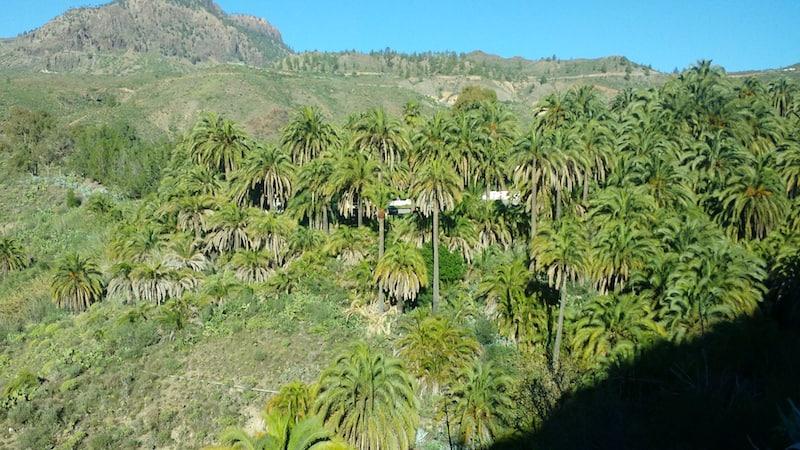 palmeras fataga