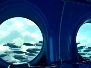 peces desde el submarino amarillo de mogan