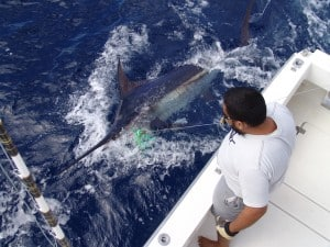 Fisch Yachtcharter gran canaria