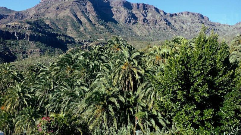 Palmen im Süden von Gran Canaria
