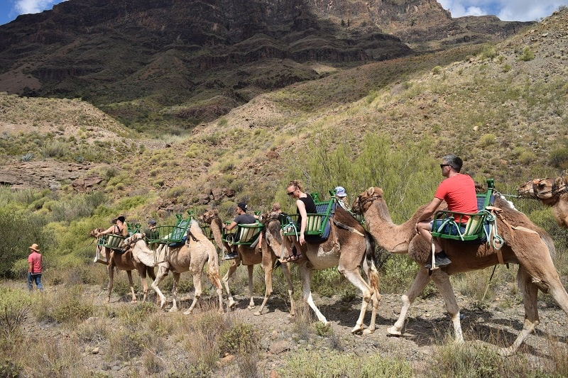 where to ride a dromedar in Gran Canaria