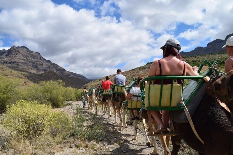 Subir a camello en Gran Canaria Fataga