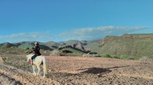 best horse tour in gran canaria