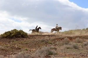 horse excursion gran canaria