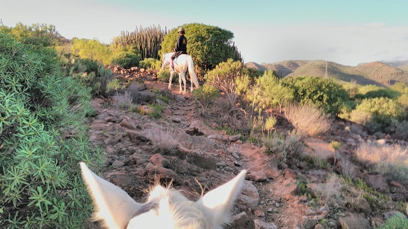 the best horse riding tour in Gran Canaria