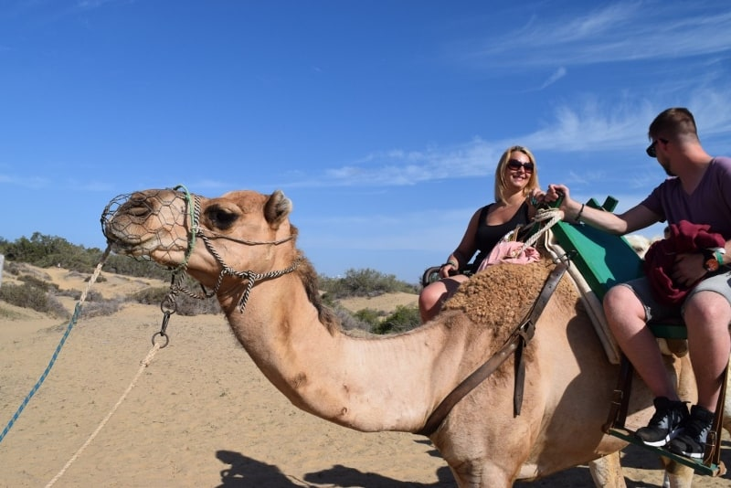 camel ride in Gran Canaria