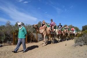 camellos por las dunas
