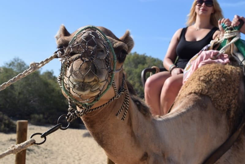 ride a camel in Amadores and Puerto Rico