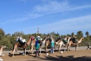 Excursión a camello en Maspalomas - Gran Canaria