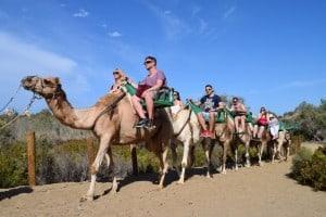 Gran canaria paseo a camello