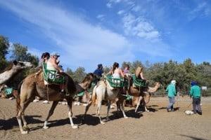 safari de camellos en Mapalomas dunas