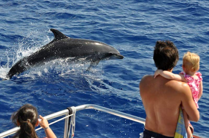 Dolphin trip with children in Gran Canaria