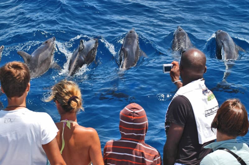 Dolphin and whale sightseeing in Gran Canaria