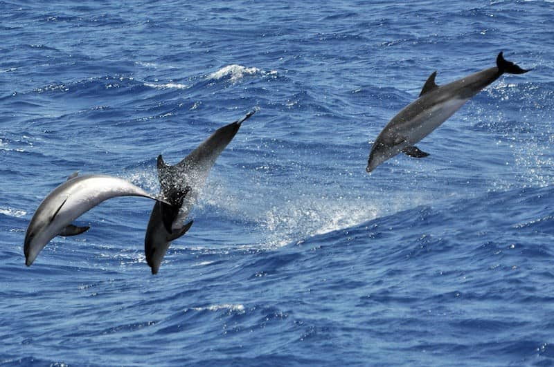 swim with dolphins in Gran Canaria