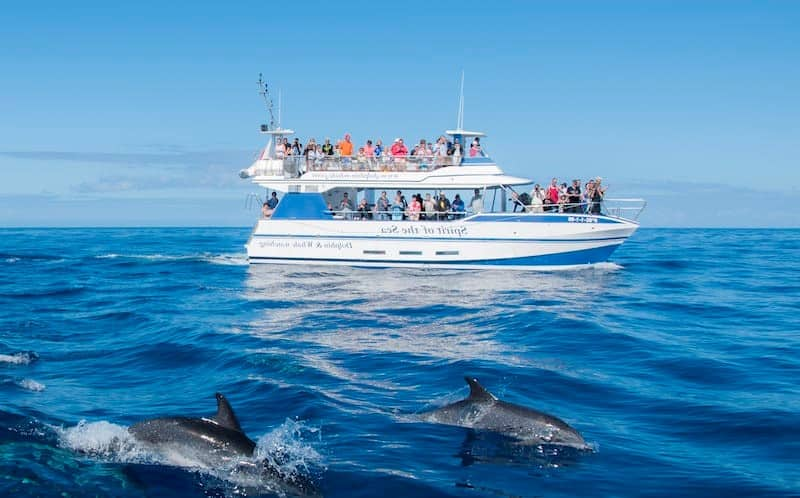 Dolphin and whale watching trip in Gran Canaria - High rated in 2020