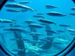 actividad submarina para niños en gran canaria