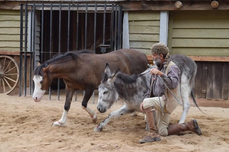 siouxcity horses