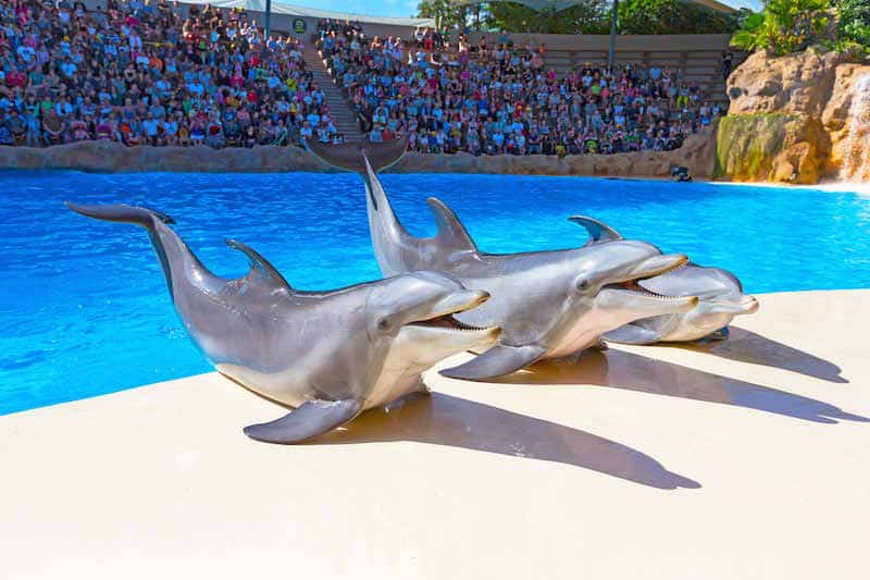 Loro Park shows dolphins